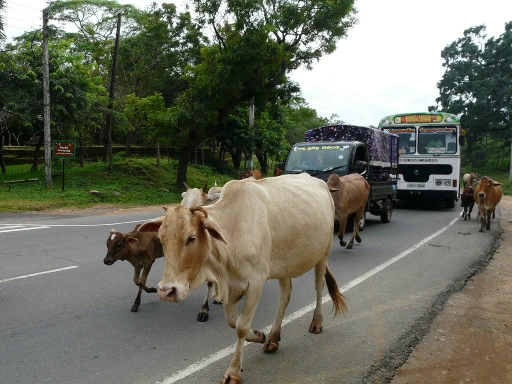 car srilanka