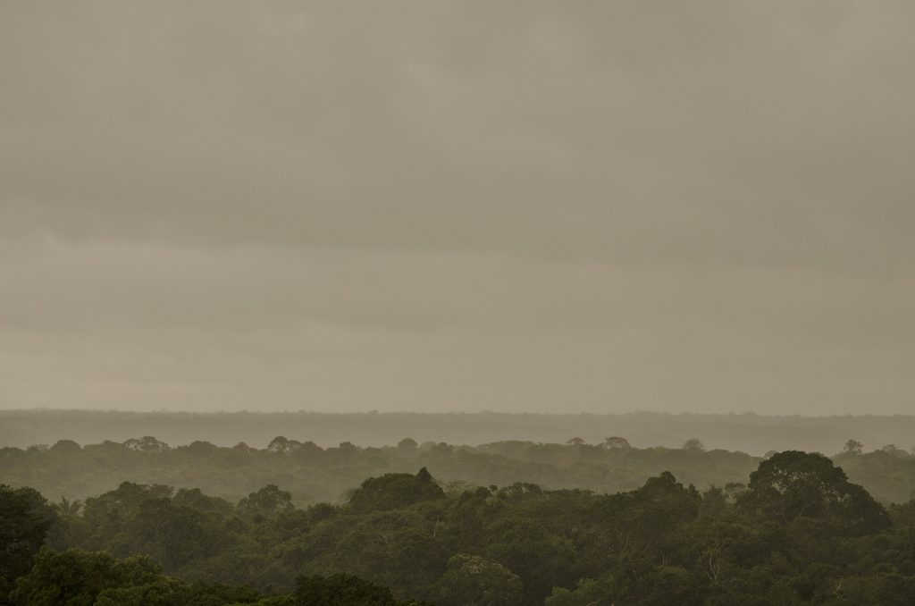 brésil-forêt